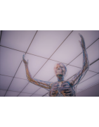 Cuerpo